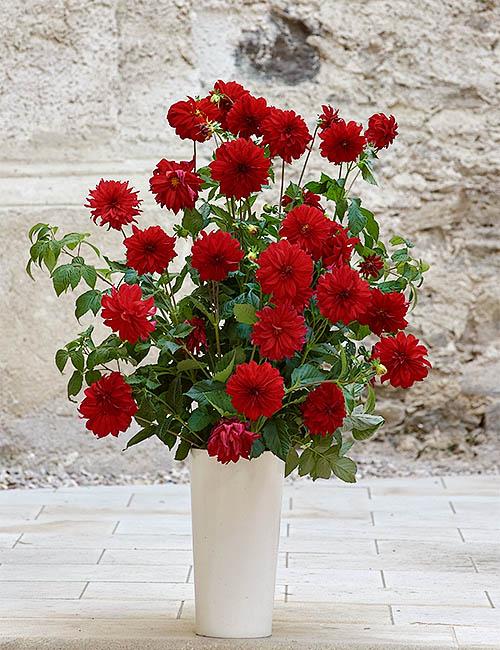Pohrebná služa Posol - Kvety - Predplatený pohreb s garanciou.